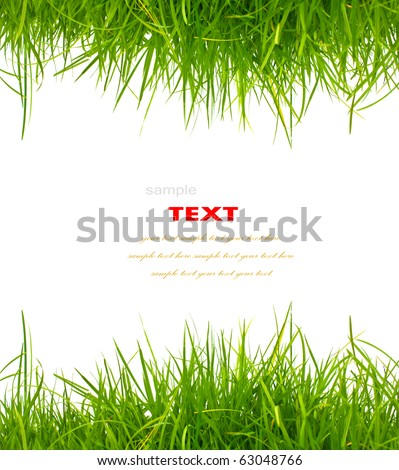 Fresh spring green grass on white background with copy space. - stock photo