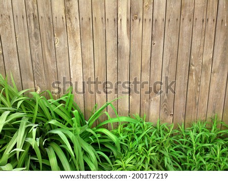 Fresh spring green grass over wood fence background / outdoors photography of wooden fence  - stock photo