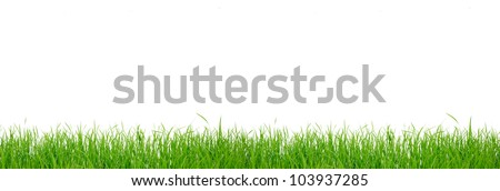 Fresh spring green grass panorama isolated on white background - stock photo