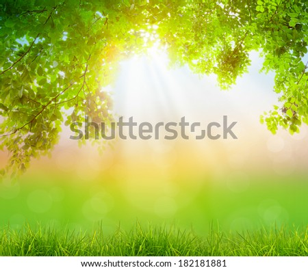 Fresh spring green grass with green leaf , Summer time - stock photo