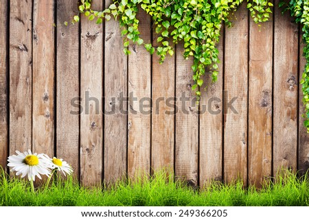 Fresh spring green grass with white flower camomile and leaf plant over wood fence background - stock photo