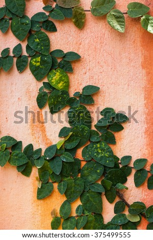 Fresh spring green leaf plant over grunge wall background. - stock photo