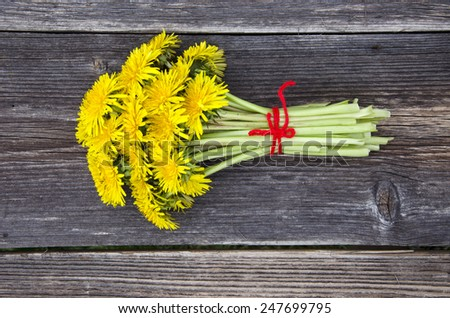 fresh spring healthy dandelion flowers bunch on old farm garden table - stock photo
