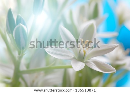 Fresh Spring meadow with tiny flowers - stock photo