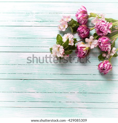 Fresh spring  tulip flowers  and apple tree flowers on turquoise painted wooden background. Selective focus. Place for text. Square image.