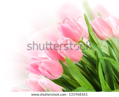 Fresh spring tulip  flowers as a holiday postcard design - stock photo