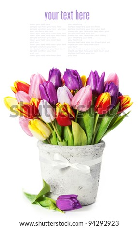 fresh spring tulips on white background (with sample text) - stock photo