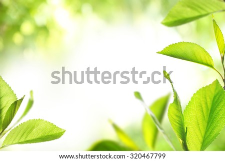 Fresh spring twigs with green leaves on blurred background - stock photo