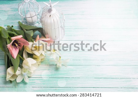 Fresh  spring white and pink  tulips and narcissus flowers, candles in decorative bird cages in ray of light  on turquoise  painted wooden background. Selective focus. Place for text.  - stock photo