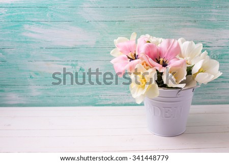 Fresh  spring white and pink  tulips and narcissus in white bucket  on white painted wooden background against turquoise wall. Selective focus. Place for text.  - stock photo