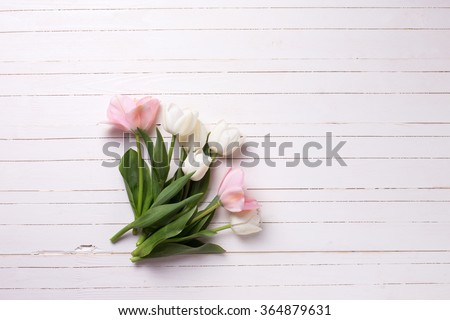 Fresh  spring white and pink  tulips  on white  painted wooden background. Selective focus. Place for text.  - stock photo