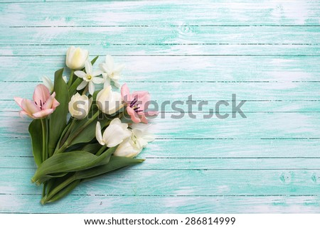 Fresh  spring yellow tulips and narcissus flowers on turquoise  painted wooden background. Selective focus. Place for text.  - stock photo