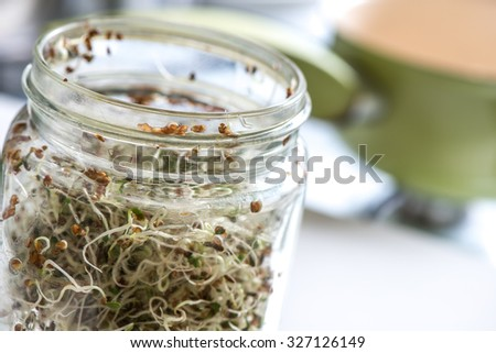 Fresh sprouts seeds isolated on glass jar - stock photo