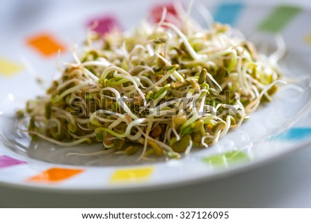Fresh sprouts seeds isolated on plate ready to eat - stock photo