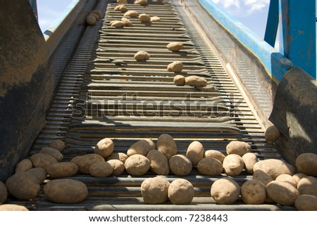 Fresh Spuds - stock photo