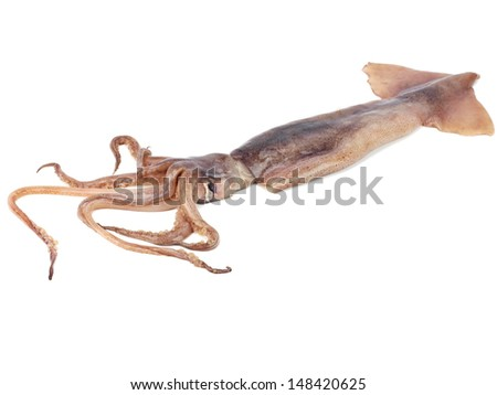 Fresh squid (calamare) on a white background