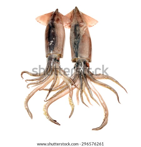 Fresh squid isolated on white background  - stock photo