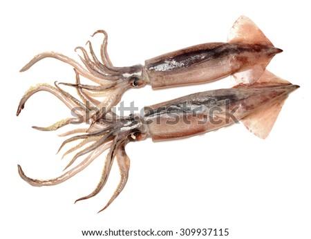 Fresh squid isolated on white background  - stock photo