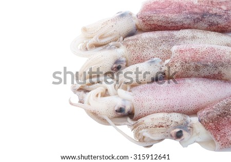 Fresh squids isolated on white background with room for text - stock photo