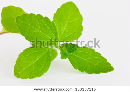 Fresh stevia leaves on a light background - stock photo