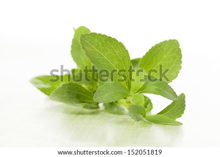Fresh stevia sugar leaf on green background. Natural green bright healthy herbal still life.  - stock photo