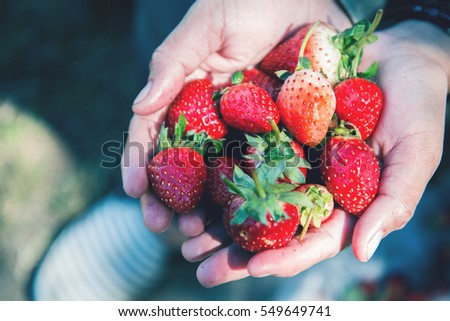 Fresh strawberries closeup. holding strawberry in hands