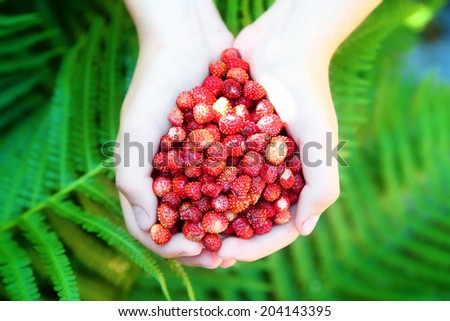 Fresh strawberries in the hands - stock photo