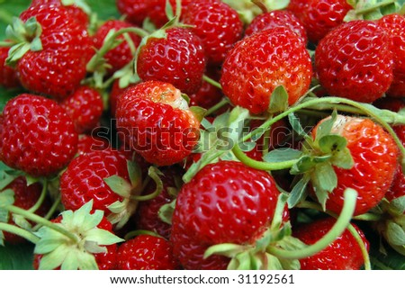 Fresh Strawberries wallpaper . Can be used as background - stock photo