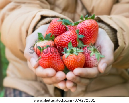 Fresh strawberry in woman hands - stock photo