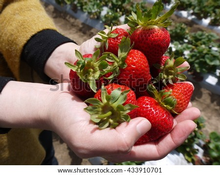 Fresh Strawberry on a woman's hands - stock photo