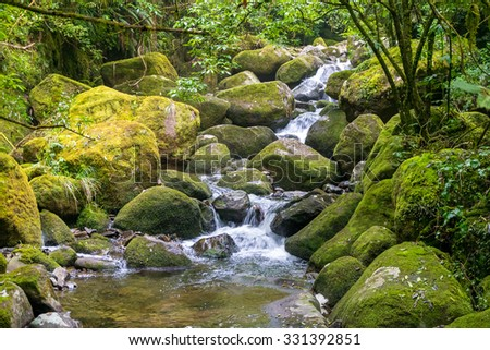Fresh stream in the forest. Kaimai Range,New Zealand  - stock photo