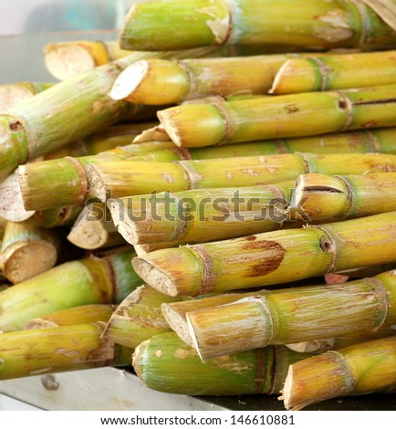 Fresh sugar cane for extracting the juice