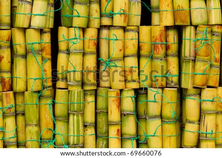 FRESH SUGARCANE CUT FOR EXTRACTION OF JUICE SMALL PACK FOR SALE IN ECUADOR   - stock photo