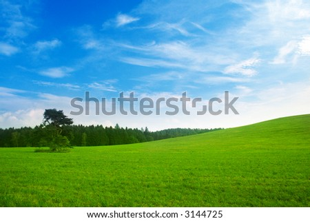 Fresh summer landscape - blue sky, green trees and grass