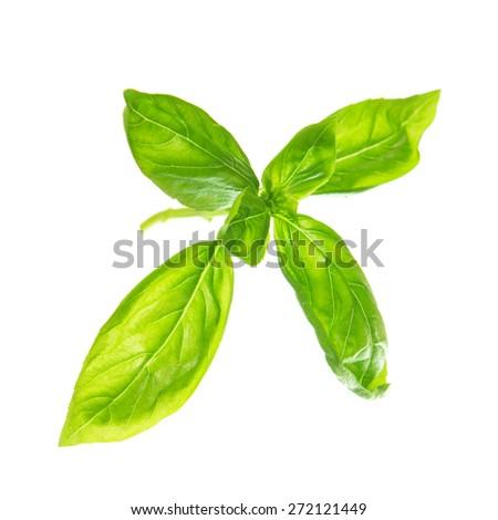 Fresh sweet basil leaves isolated on white background. - stock photo