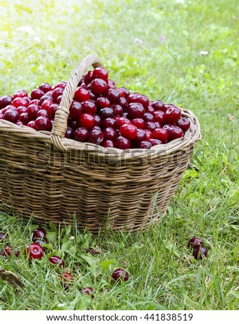 Fresh sweet ripe cherries in a wicker basket on a grass, summer harvest, toned image - stock photo