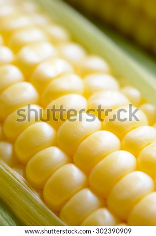 Fresh Sweet Ripe Corn Cobs with Green Leaves. Soft focus. - stock photo