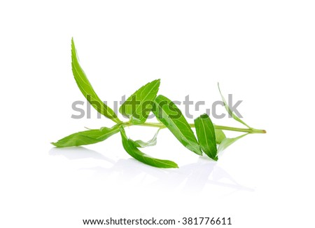 fresh tarragon herb isolated on a white background