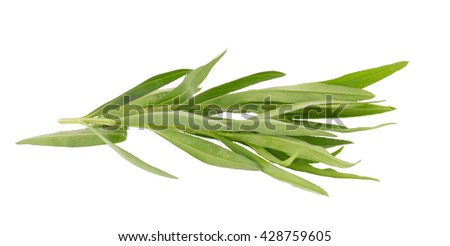 Fresh tarragon herbs, Tarragon herbs close up isolated on white