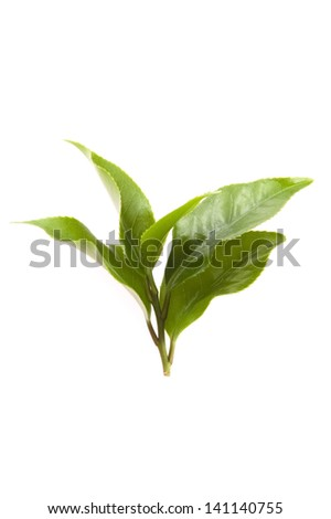fresh tea leaves isoalted on the white background - stock photo