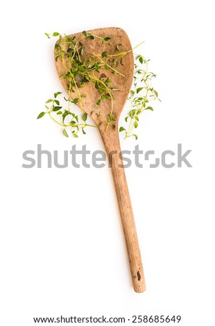 fresh thyme herb on a wooden spoon isolated on white background - stock photo