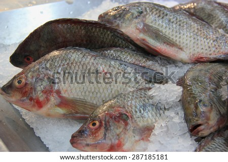 Fresh Tilapia at a Market - stock photo