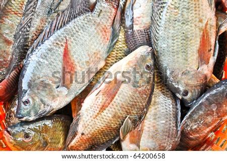 Fresh Tilapia or Oreochromis locally in Thai is Nil (Black) Fish - stock photo