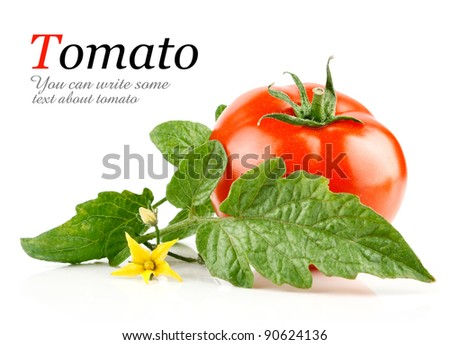 fresh tomato vegetables with green leaves isolated on white background - stock photo
