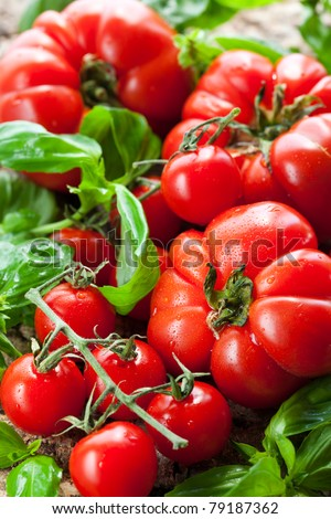 fresh tomatoes and basil on the wooden background - stock photo
