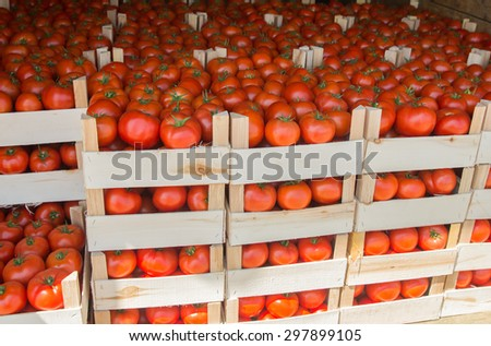 Fresh Tomatoes in crate at the Market - stock photo