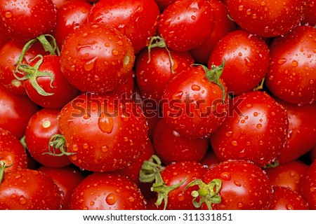Fresh tomatoes in drops of dew as a background - stock photo