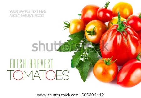 Fresh tomatoes with green leaves copyspace. Isolated on white background