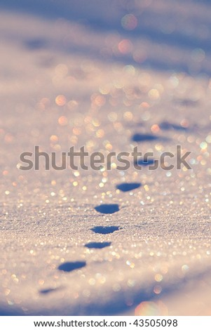 Fresh tracks - stock photo