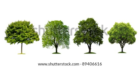 Fresh tree collection isolated on white background - stock photo